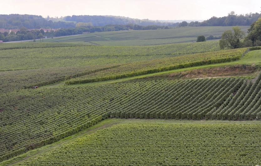 Hypnotiques sillons des vignes