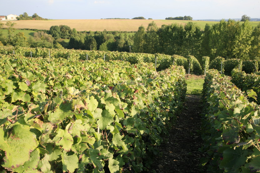 Vendanges en Champagne