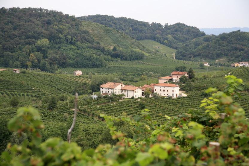 Les collines du Prosecco autour de Vadobbiadene