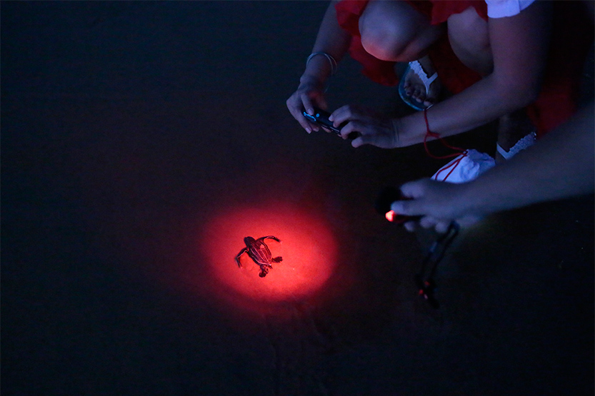 Pour ne pas les désorienter, lumière rouge obligatoire