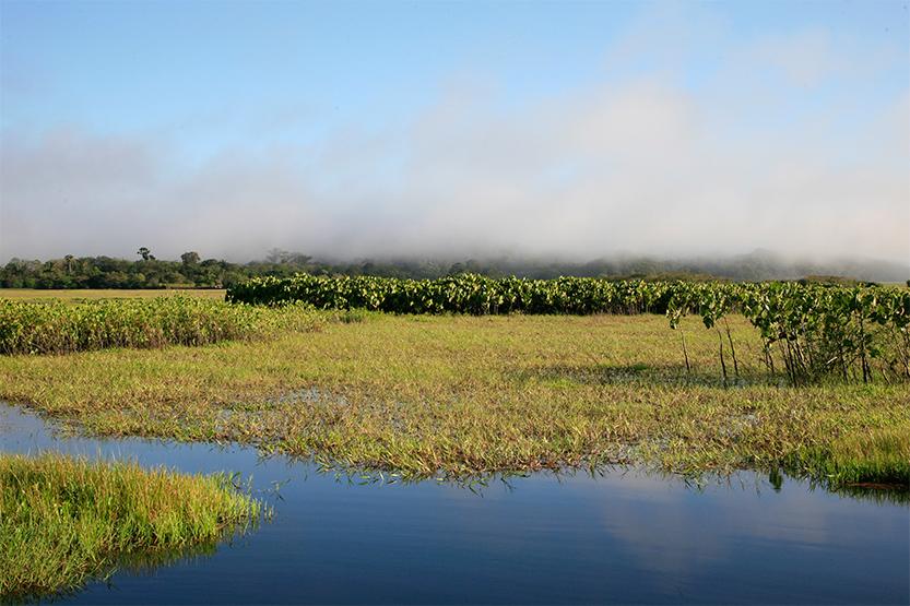 Les marais de Kaw-Roura