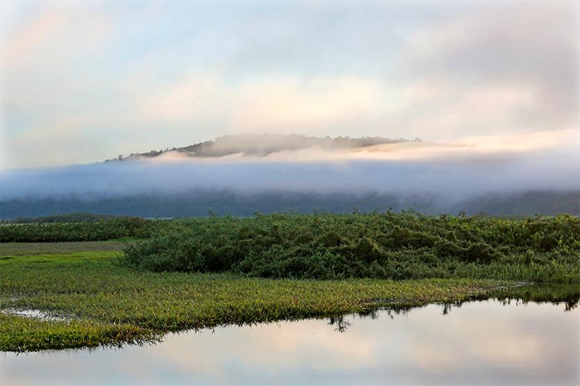 Les marais de Kaw-Roura, brumes du petit matin