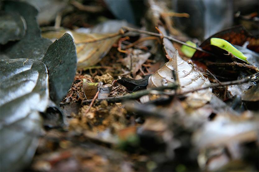 Le camouflage des animaux... ici une petite grenouille