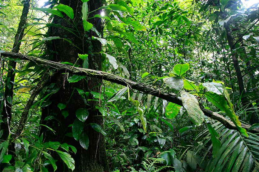 Apprendre à regarder la forêt, Réserve naturelle Trésor