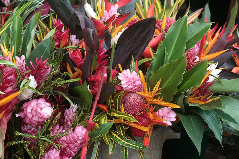 Fleurs tropicales cultivées par les Hmongs à Cacao
