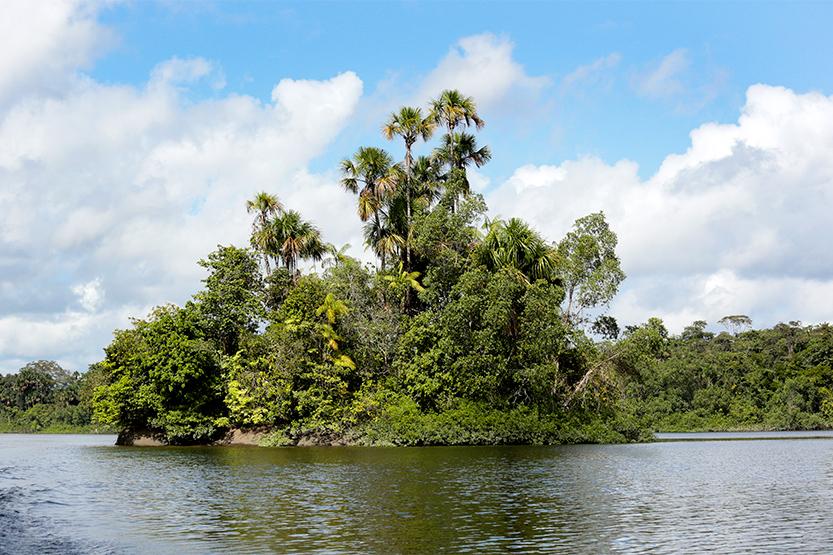 Un îlot sur l'Oyapock