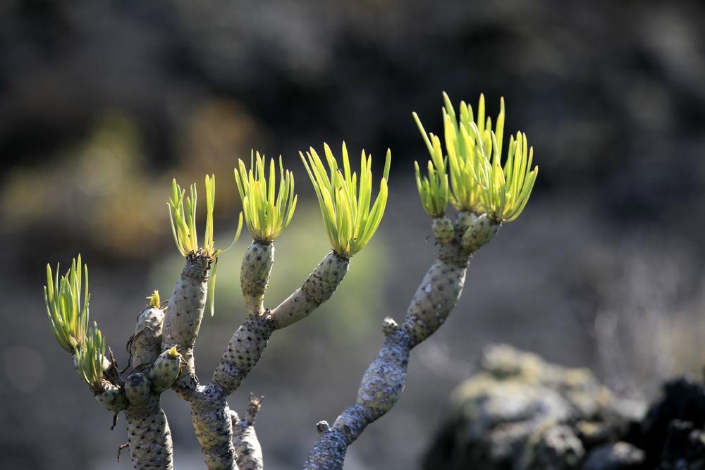 Végétation improbable au cœur des cratères