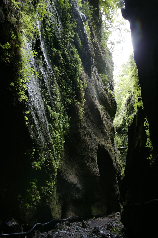Gorges au cœur de la forêt de Los Tilos