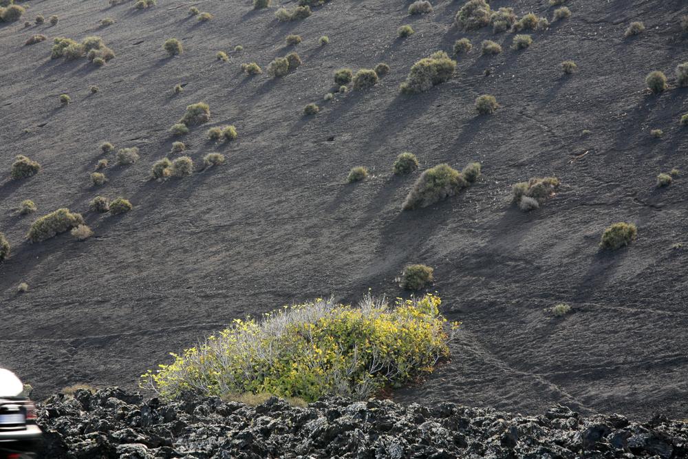 Paysage dans le parc naturel de Timanfaya