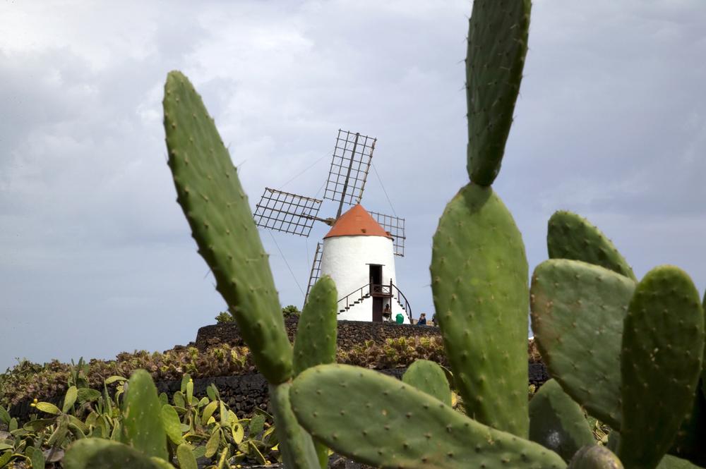 Cactus garden, Guatiza, Lanzarote,