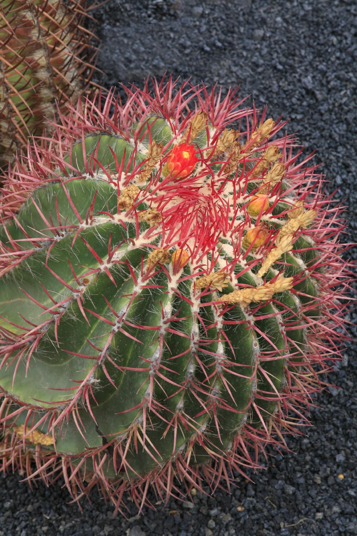 Jardins de cactus de Manrique