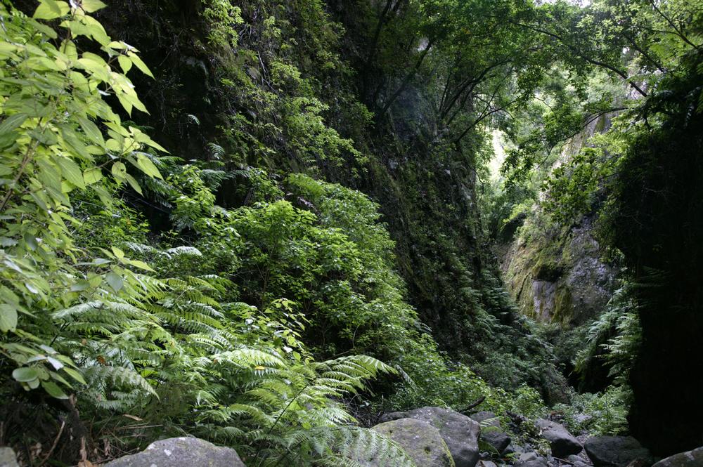 Les denses forêts de Los Tilos, La Palma