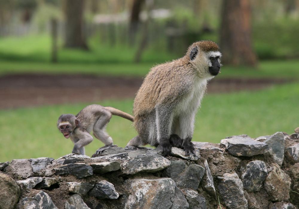 Arrivée au Parc National de Nakuru