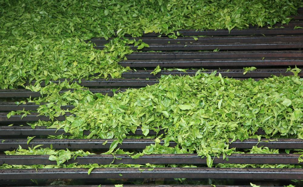 Mettre les feuilles au séchage à haute température