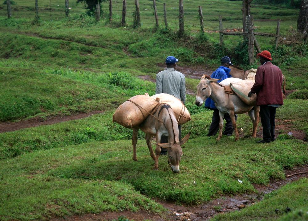 Sur les routes de Kericho
