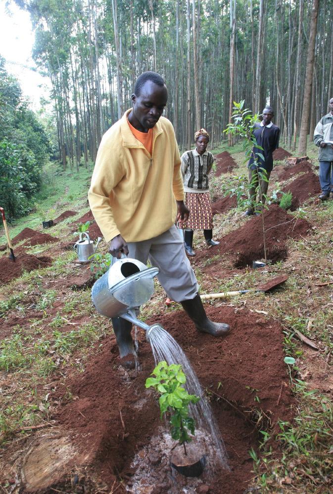 Programme de reforestation © JJ Serol