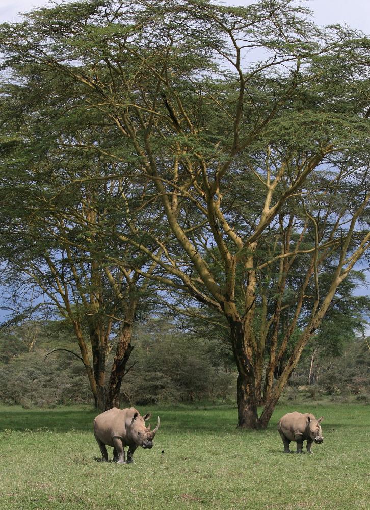 Nakuru NP © JJ Serol