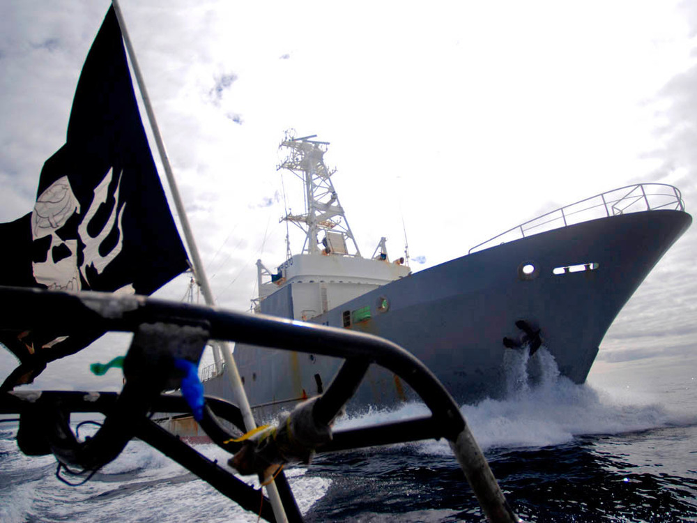Sea Shepherd in action