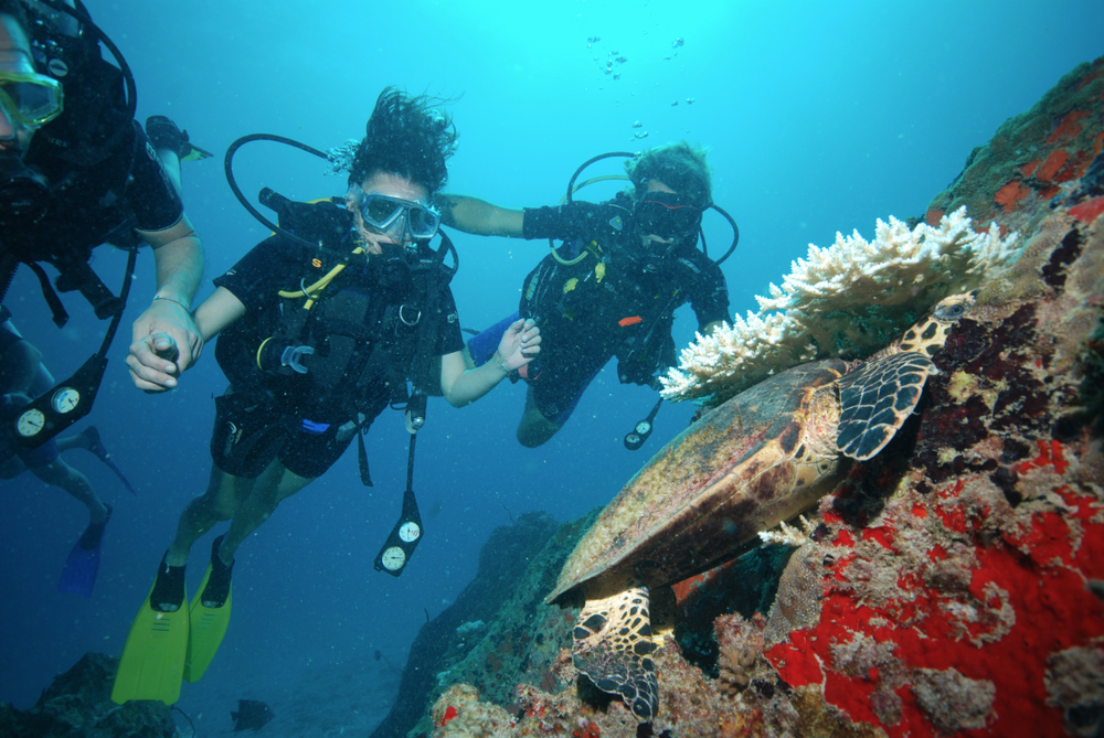 Une tortue de mer dès la première plongée