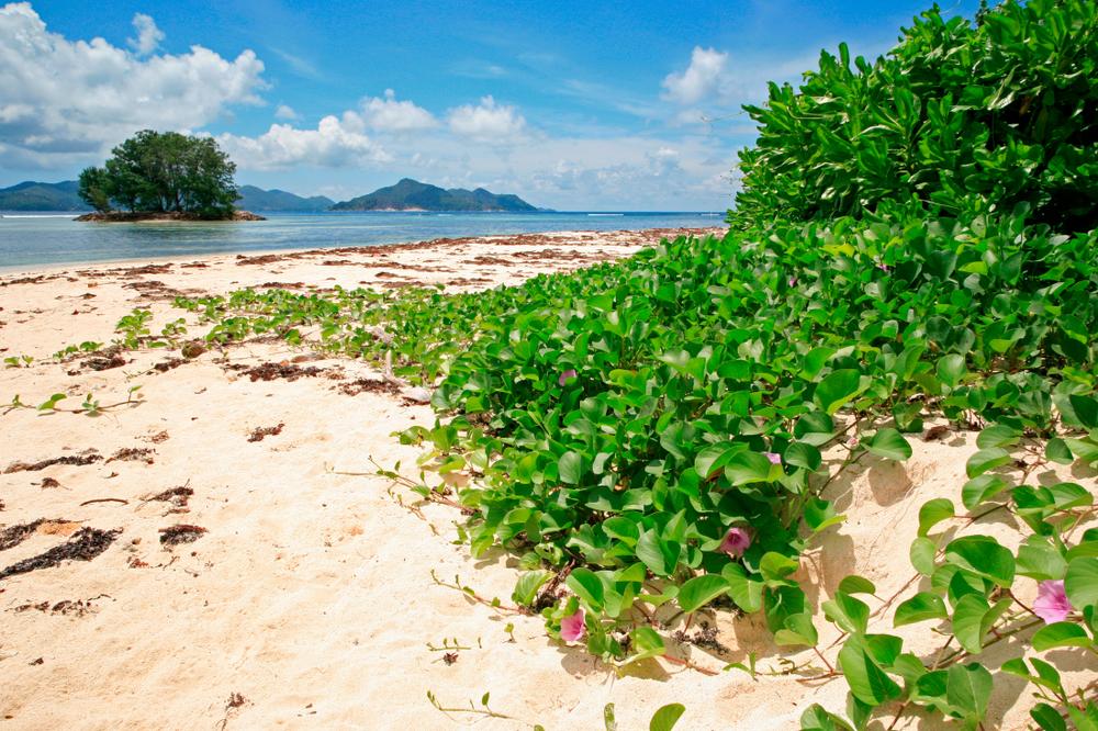 Toutes les plages rivalisent de beauté
