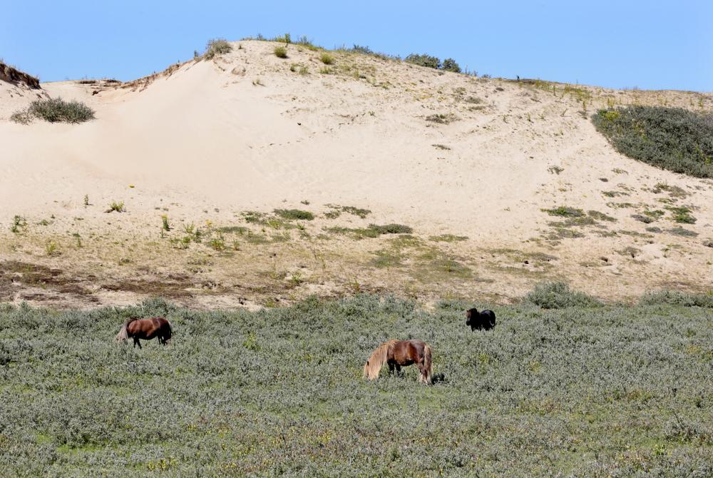 Hautes dunes, réserve de Ter Yde