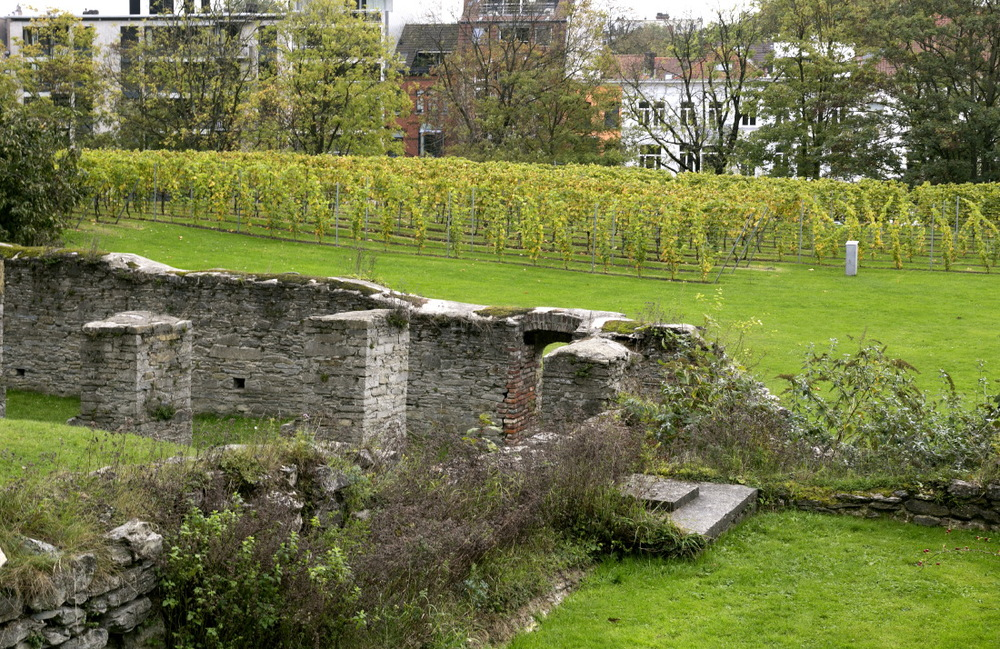 Petit vignoble de l'abbaye Sint-Pieter