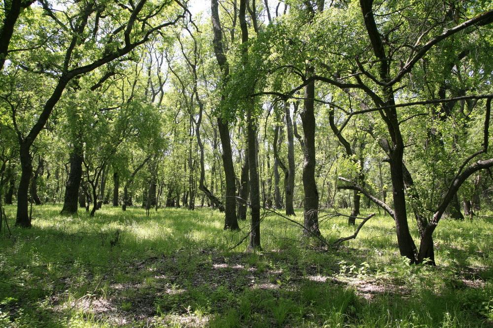Forêt de chênes de Letea