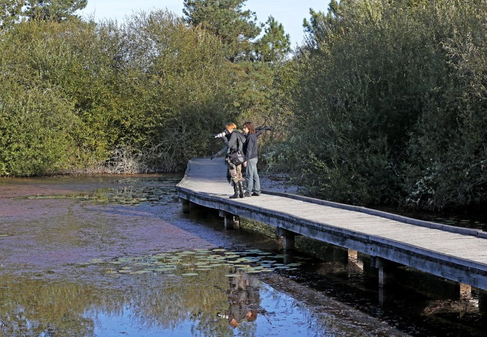 A l'étang de la Cistude, notre première photo est un crapaud!