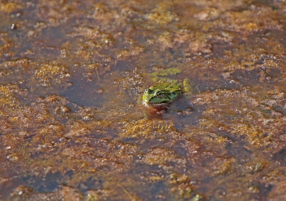 ou une grenouille (?) !!