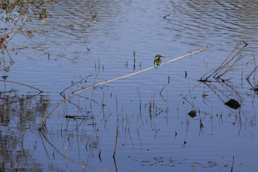 et même un martin-pêcheur aux mille couleurs