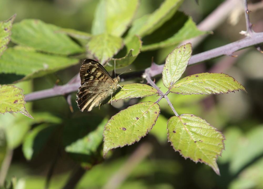 Papillons et libellules...