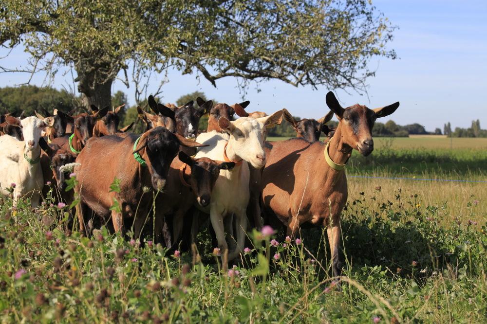A la chèvrerie Les Auzannes