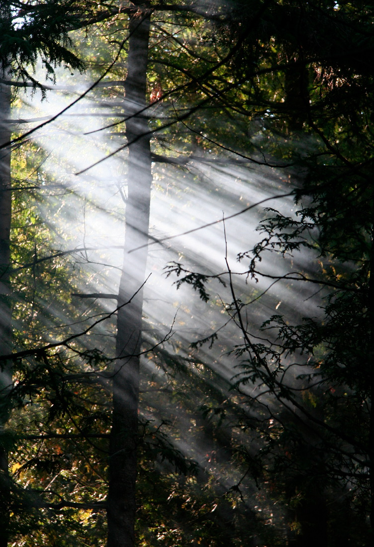 Forêts cristallines de la péninsule de Bruce