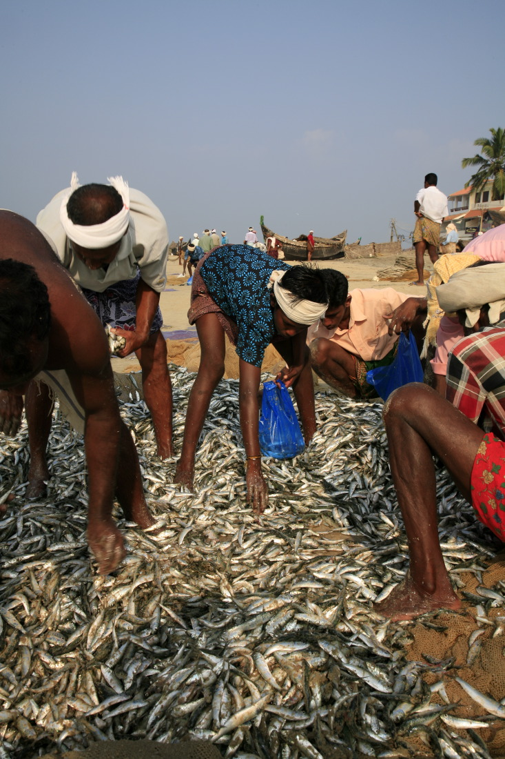 Pêcheurs sur Samudra Beach, Kempinski Kovalam Beach, Kovalam, Etat du Kerala