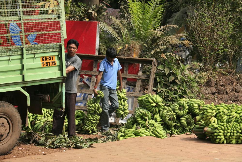 Sur les routes de campagnes de Goa