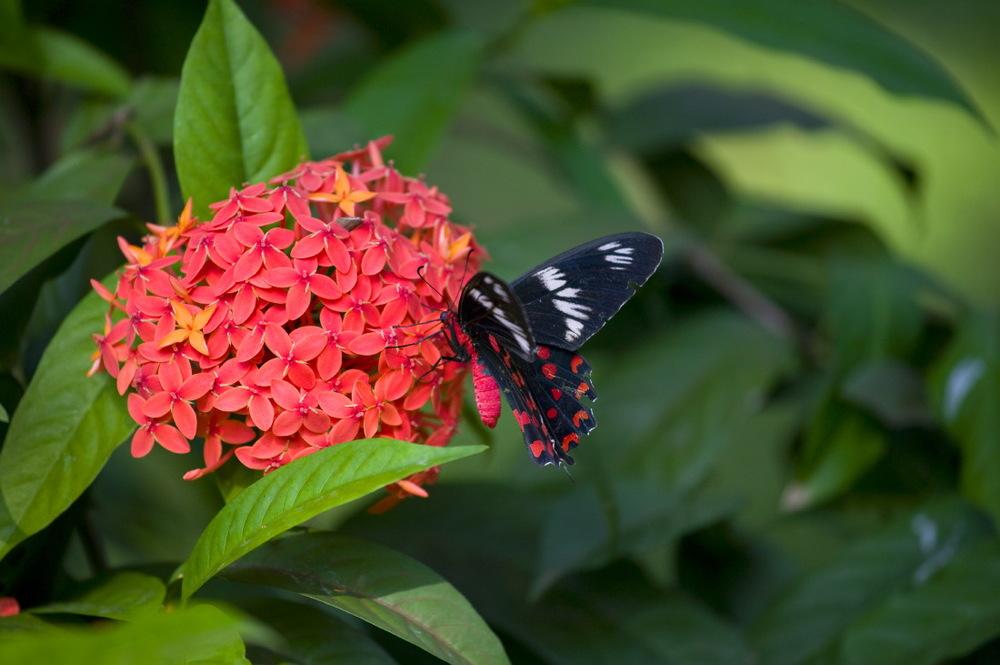 Dans le jardin du Leela Kempinski Goa, Mobor, Goa