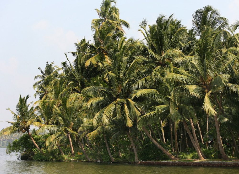 Backwaters, Kollam, Kerala