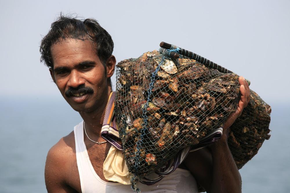 Pêcheur de moule sur la côte de la Mer Arabe, Kovalam, Kerala