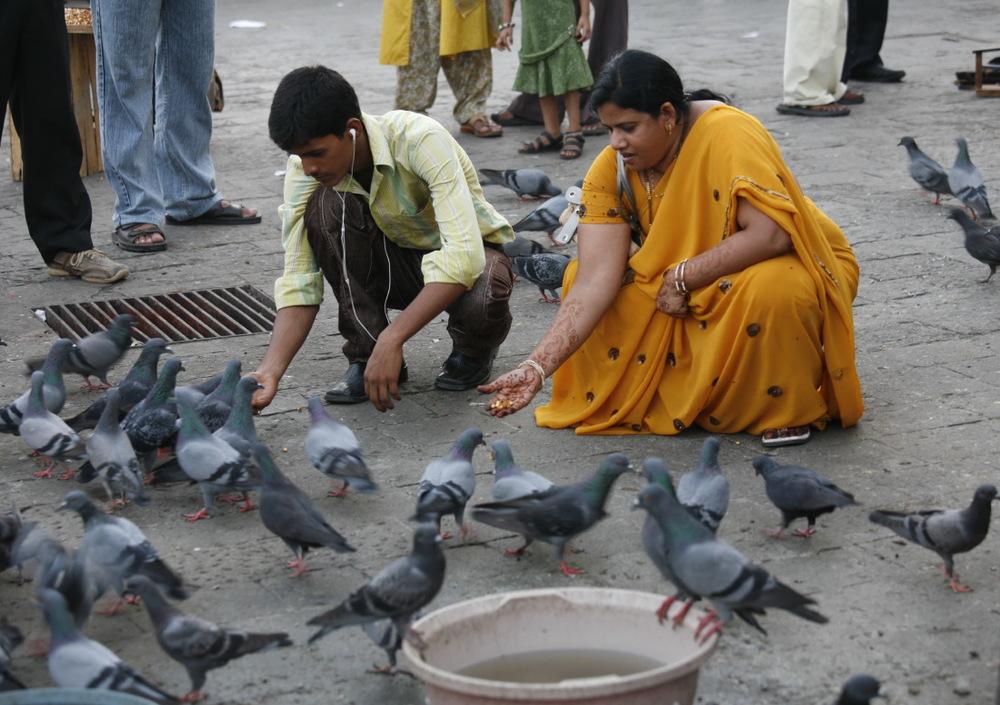 Les pigeons d'Appolo Bunder, face au port, Bombay