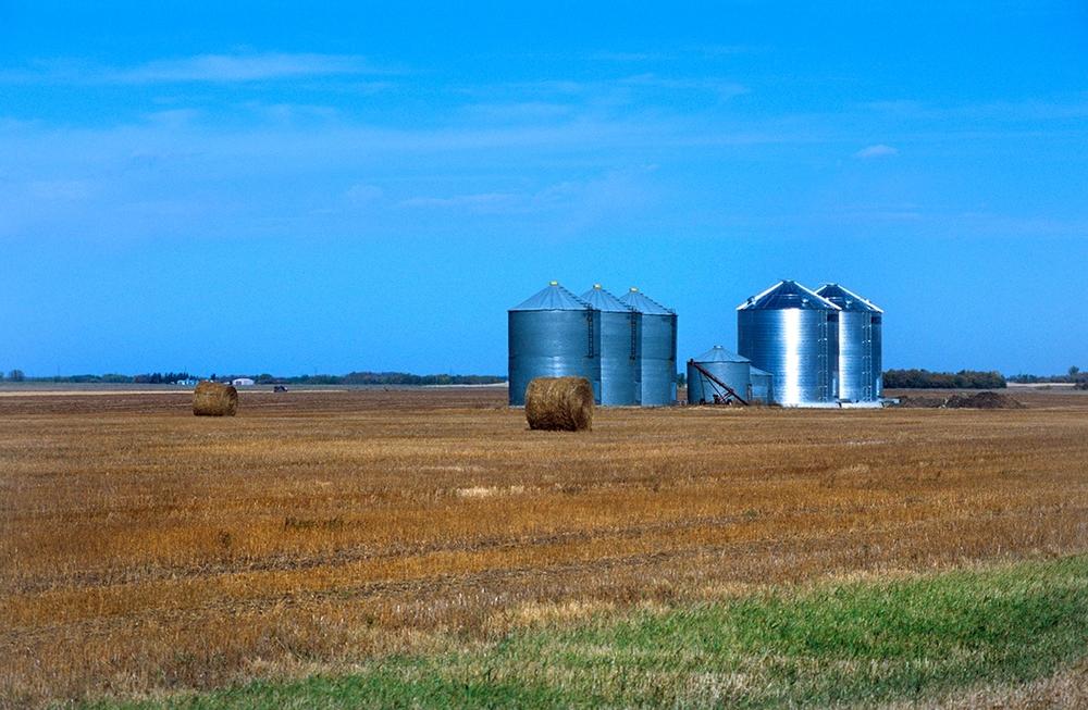 Les prairies très vite se changent en immenses champs cultivés