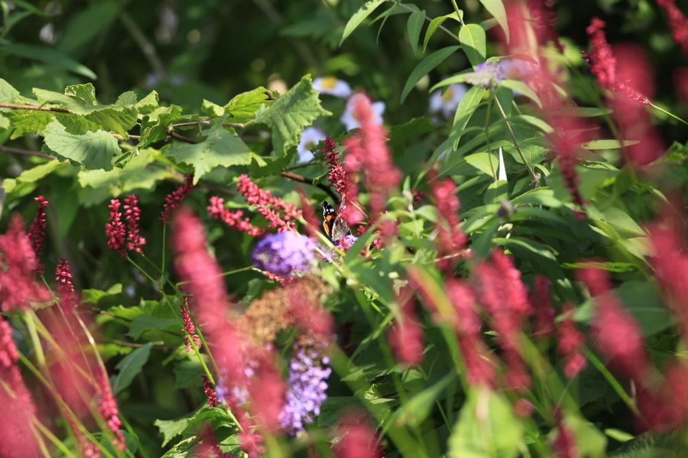 Joli papillon d'été..