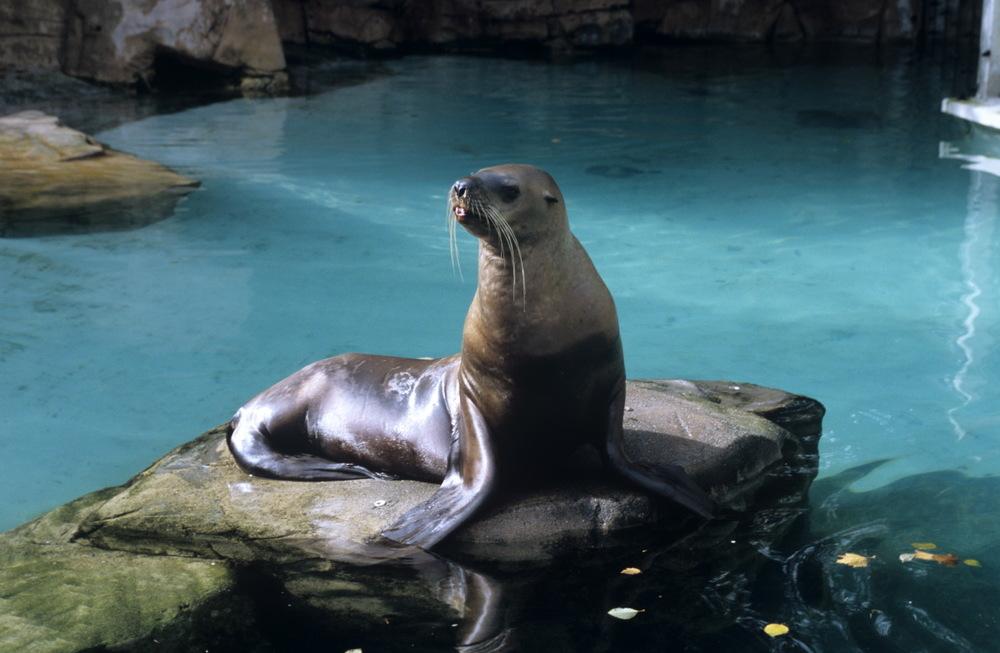 Phoques, Vancouver Aquarium