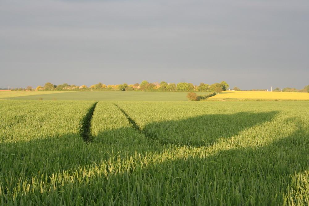 Les grandes plaines de la Sarthe, non loin du Mans