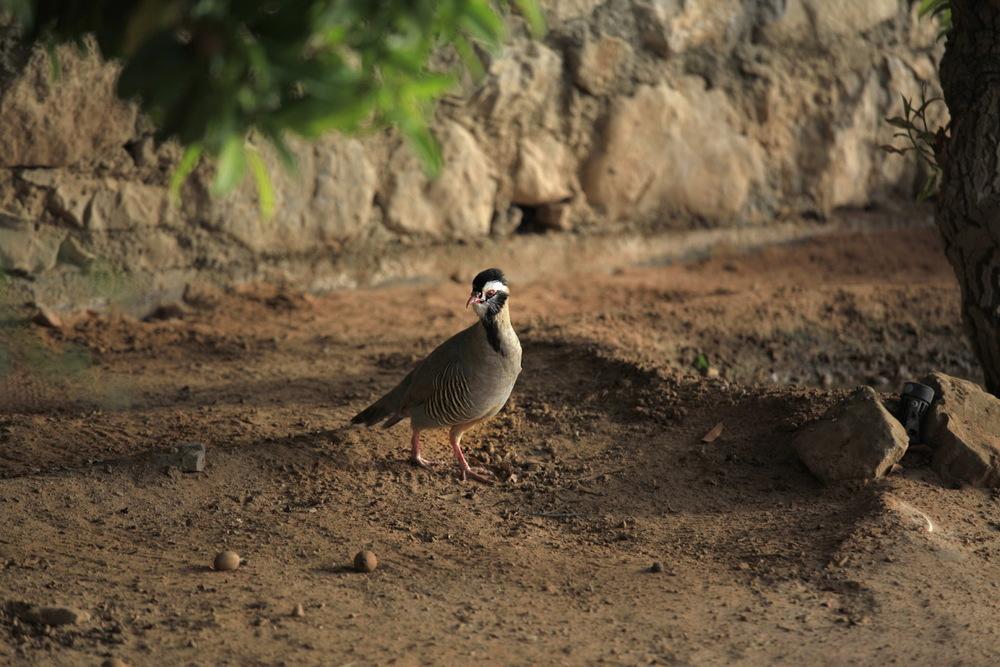Drôle d'oiseau ! Musandam, Oman