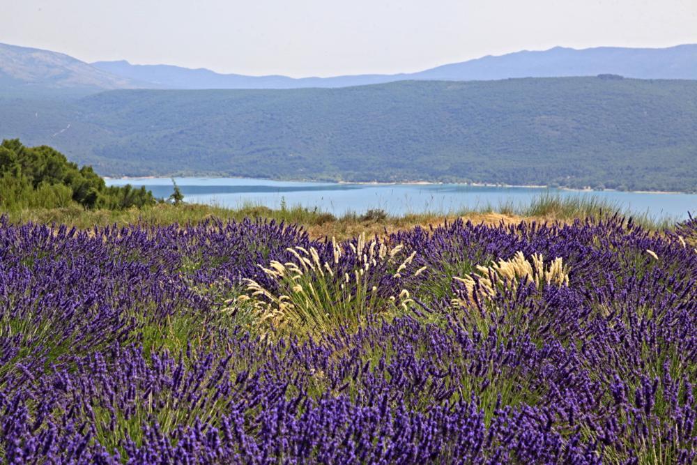 Lavandes & Lac de Sainte-Croix © S.D.