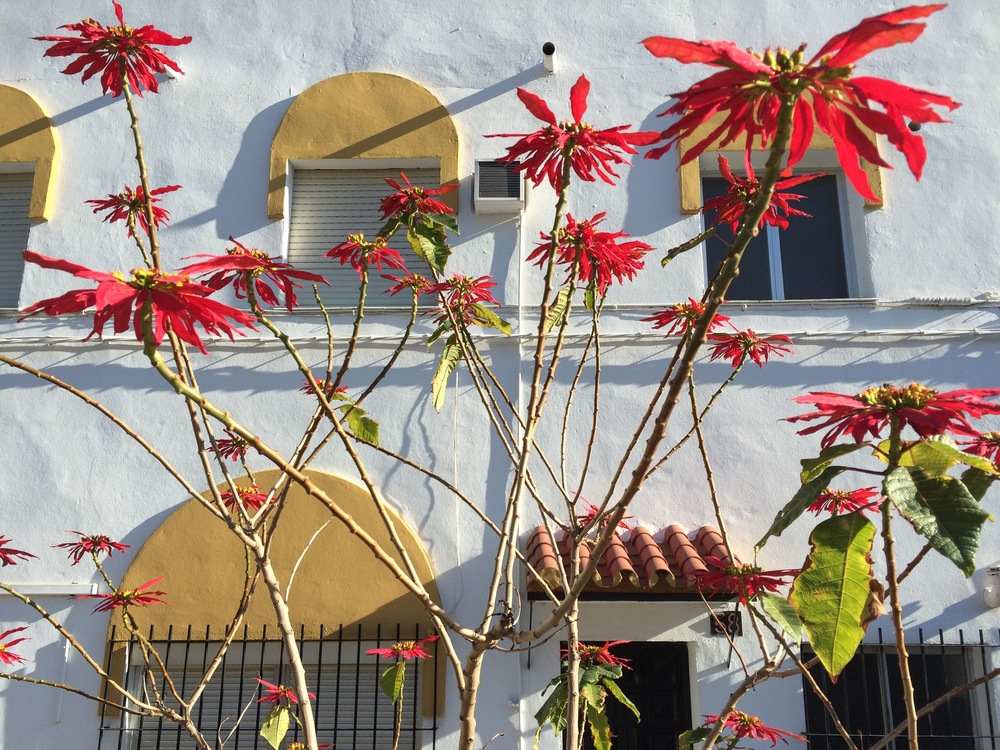 Flore et architecture, malaga