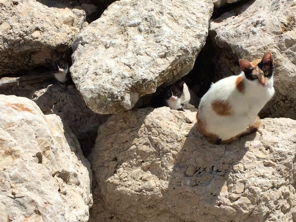 Plage des chats à El Morlaco, tout près de Malaga
