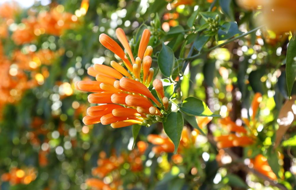 Flore exubérante même en hiver, Malaga