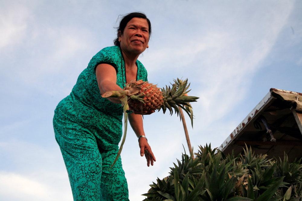 Allez, c'est parti... Ici, mes beaux ananas...