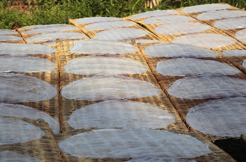 Galettes de riz sèchant dans l'herbe